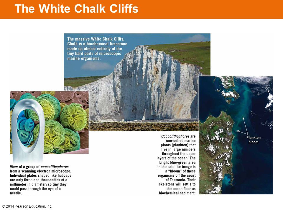 The White Chalk Cliffs