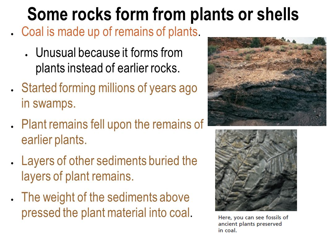 Some rocks form from plants or shells