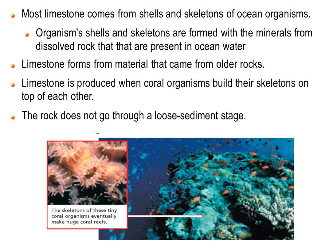Most limestone comes from shells and skeletons of ocean organisms.