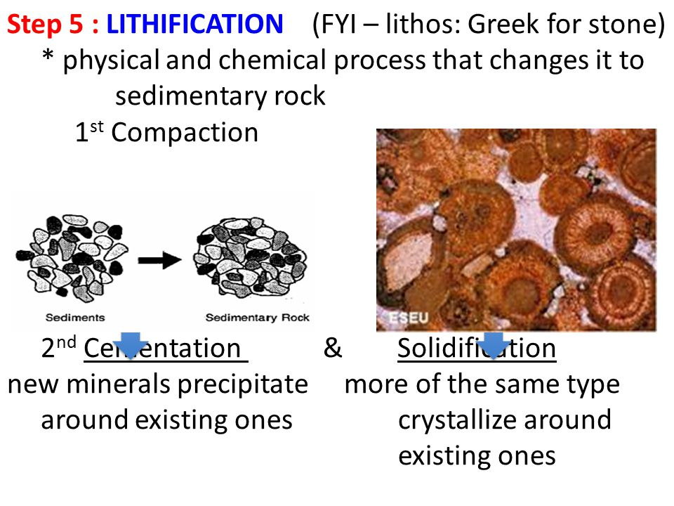 Step 5 : LITHIFICATION (FYI – lithos: Greek for stone)