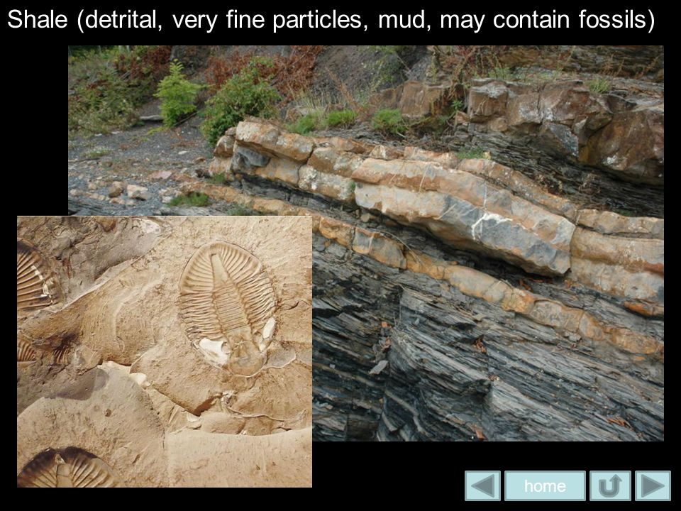 Shale (detrital, very fine particles, mud, may contain fossils)