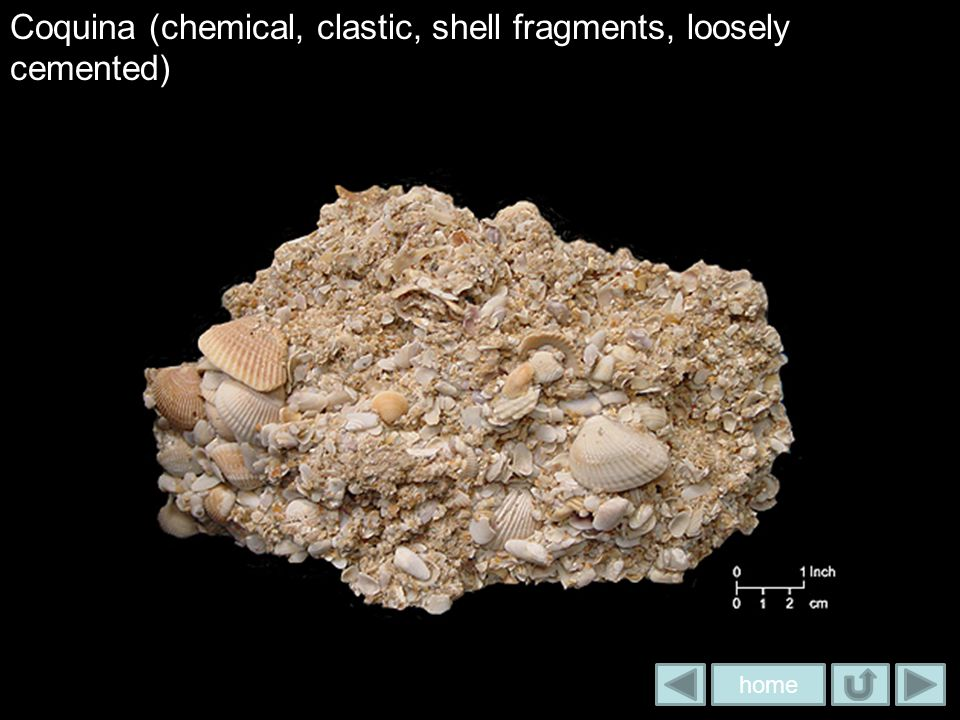 Coquina (chemical, clastic, shell fragments, loosely cemented)