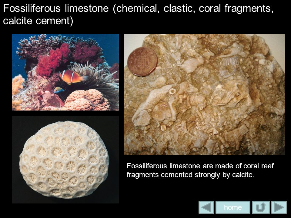 Fossiliferous limestone (chemical, clastic, coral fragments, calcite cement)