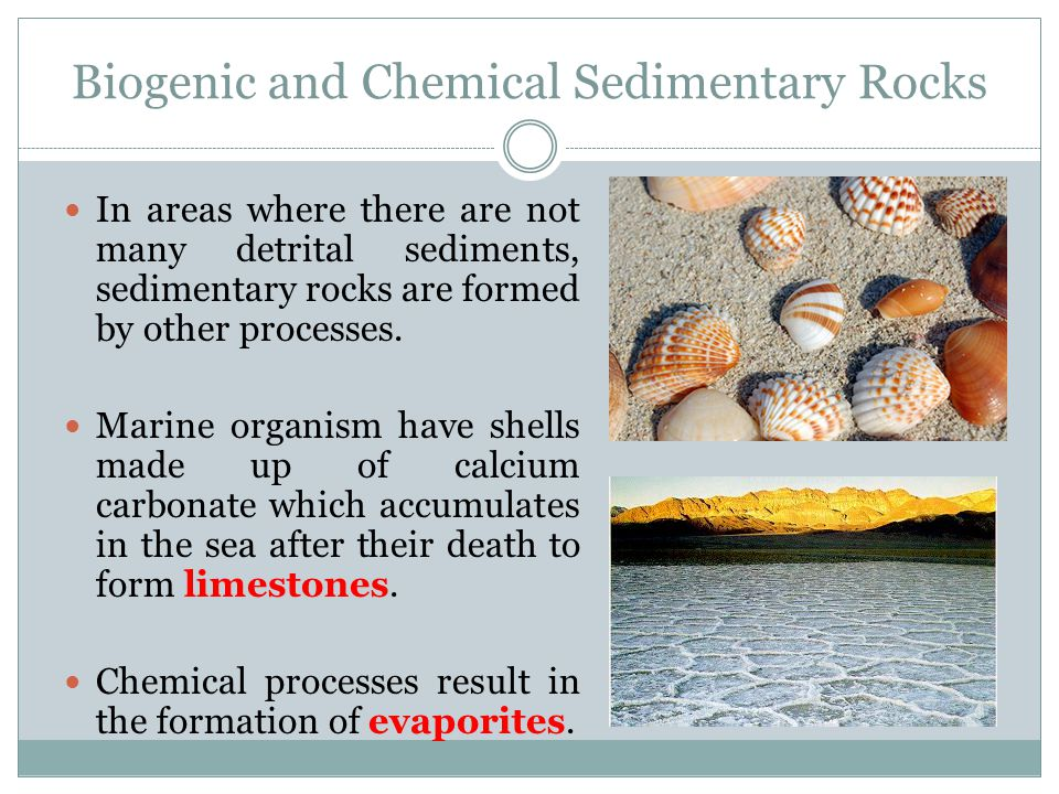 Biogenic and Chemical Sedimentary Rocks - ppt video online download