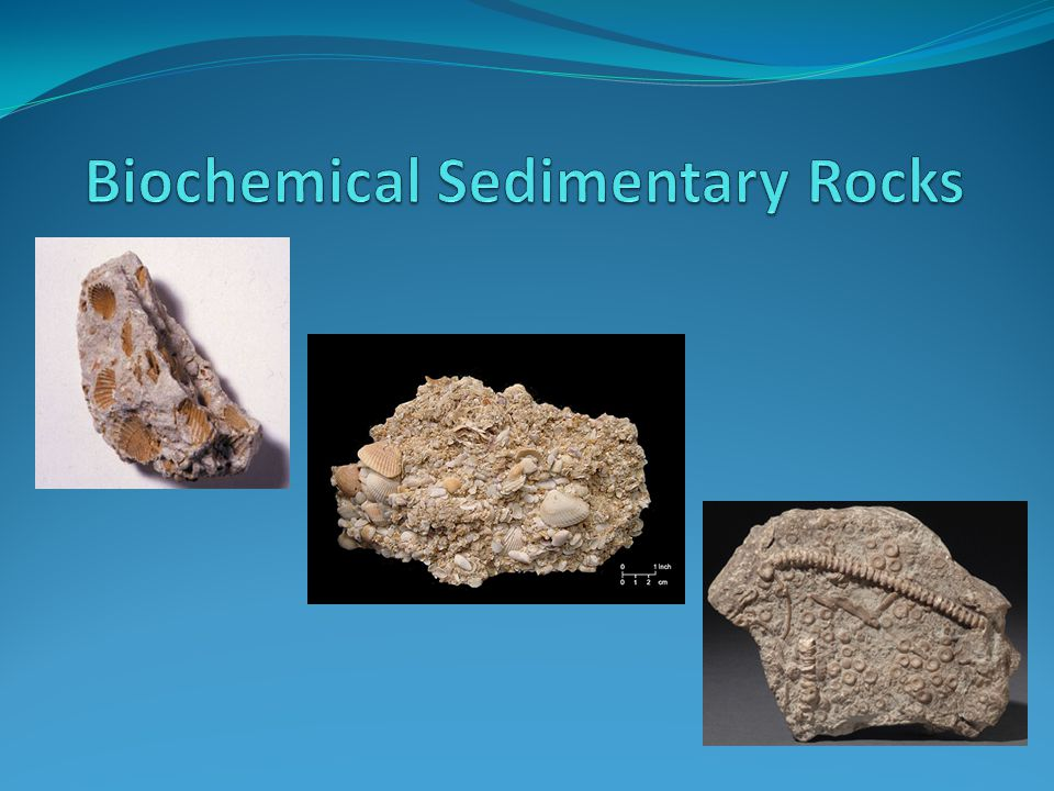 Biochemical Sedimentary Rocks