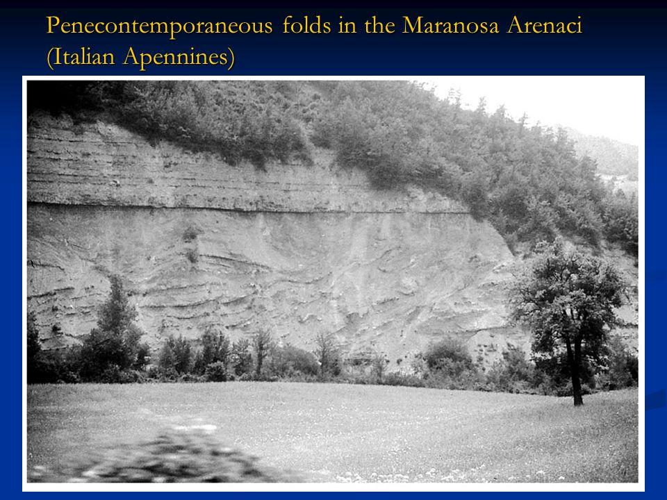 Penecontemporaneous folds in the Maranosa Arenaci (Italian Apennines)