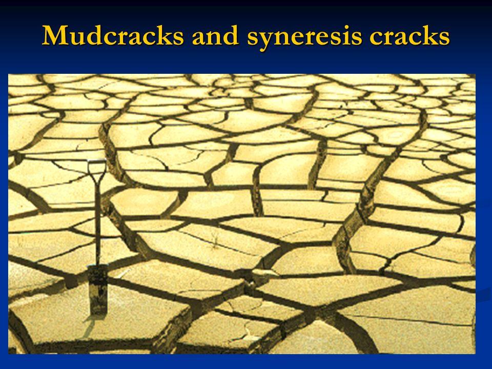 Mudcracks and syneresis cracks
