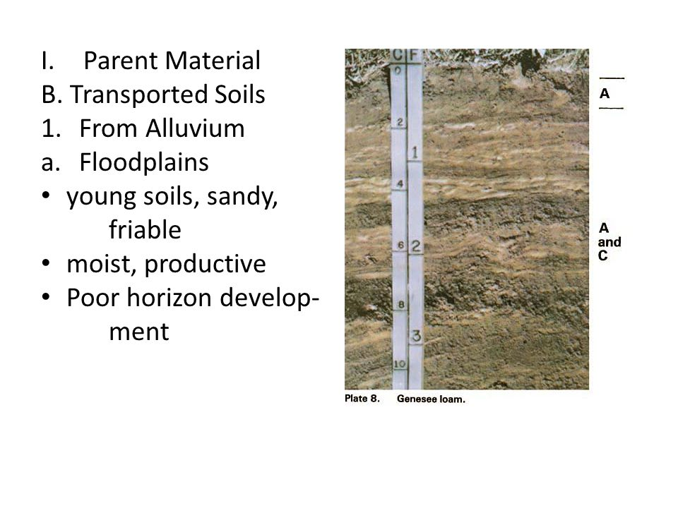 Parent Material B. Transported Soils. From Alluvium. Floodplains. young soils, sandy, friable. moist, productive.