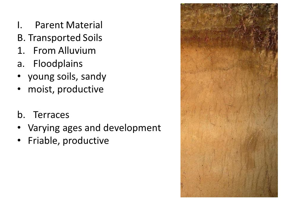 Parent Material B. Transported Soils. From Alluvium. Floodplains. young soils, sandy. moist, productive.