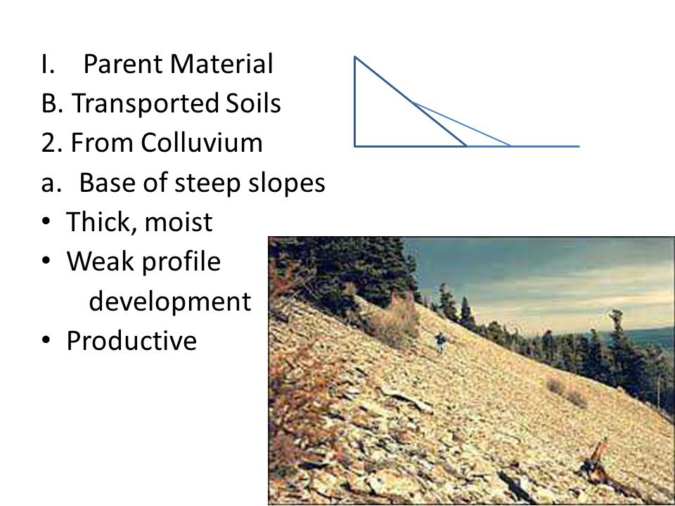 Parent Material B. Transported Soils. 2. From Colluvium. Base of steep slopes. Thick, moist. Weak profile.