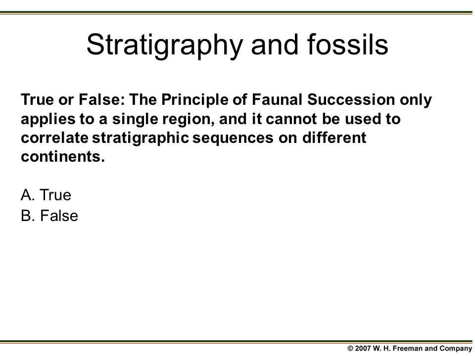 Stratigraphy and fossils