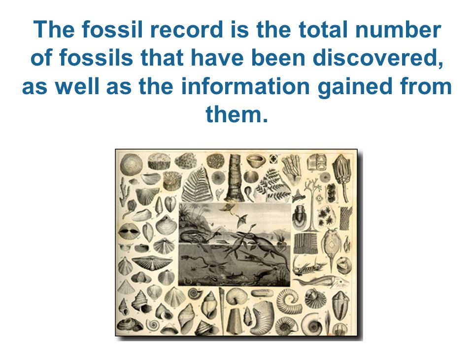 The fossil record is the total number of fossils that have been discovered, as well as the information gained from them.