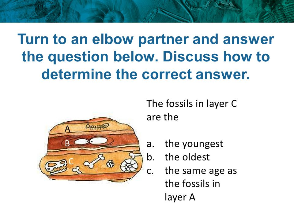 Turn to an elbow partner and answer the question below
