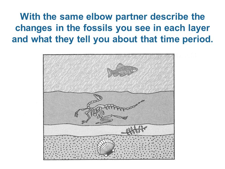 With the same elbow partner describe the changes in the fossils you see in each layer and what they tell you about that time period.