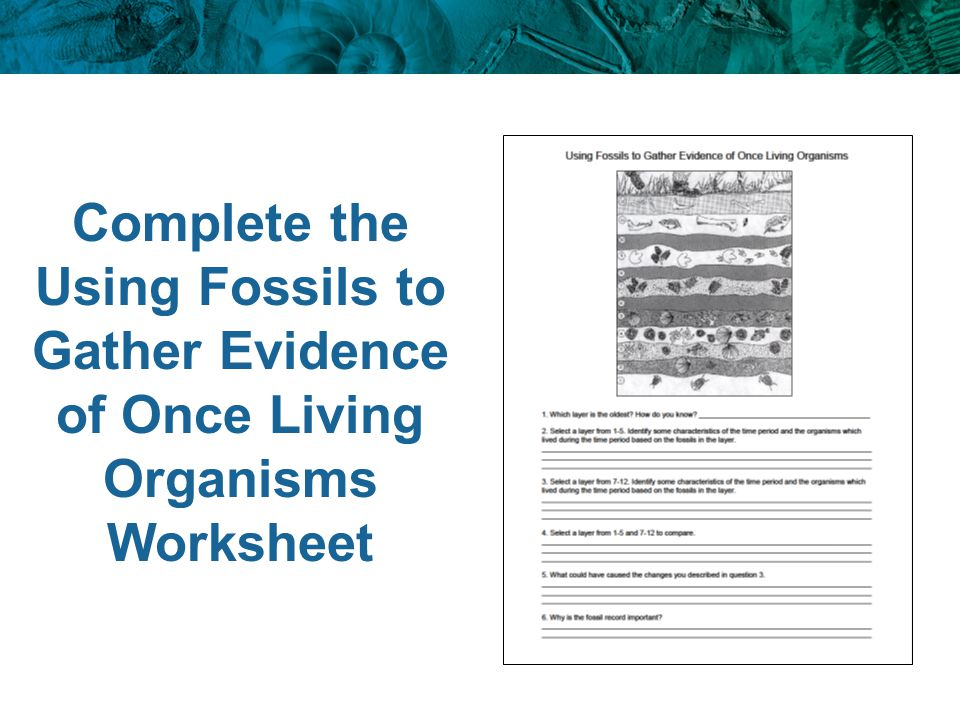 Complete the Using Fossils to Gather Evidence of Once Living Organisms Worksheet