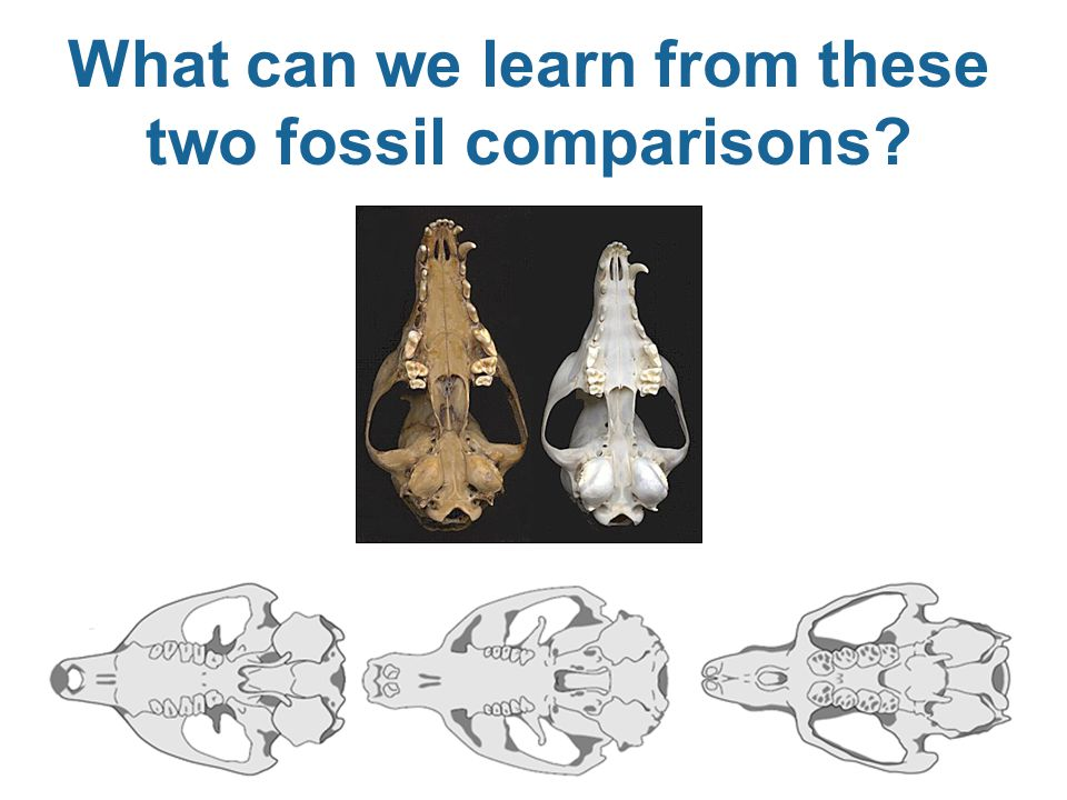 What can we learn from these two fossil comparisons