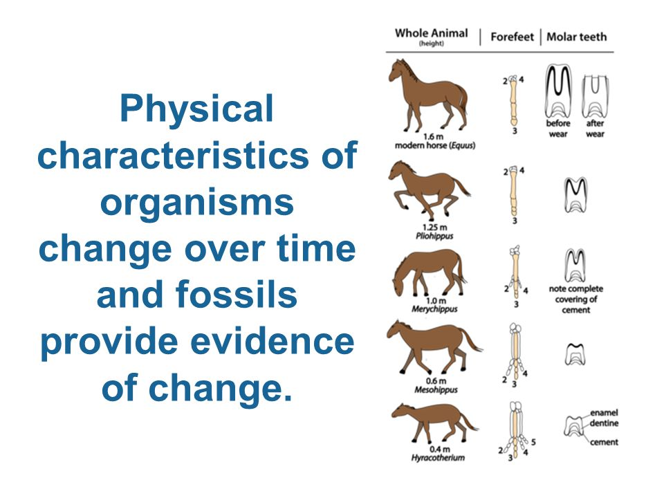 Physical characteristics of organisms change over time and fossils provide evidence of change.