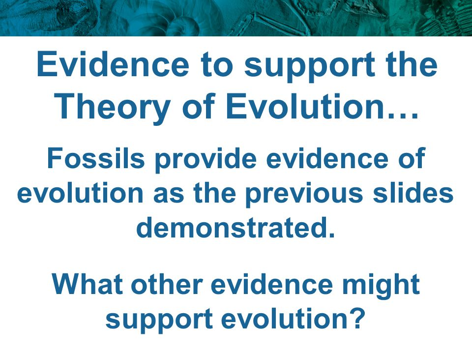 Evidence to support the Theory of Evolution…