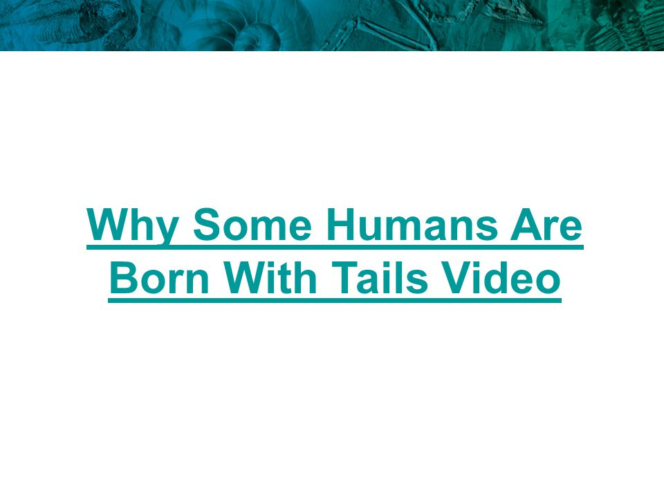 Why Some Humans Are Born With Tails Video