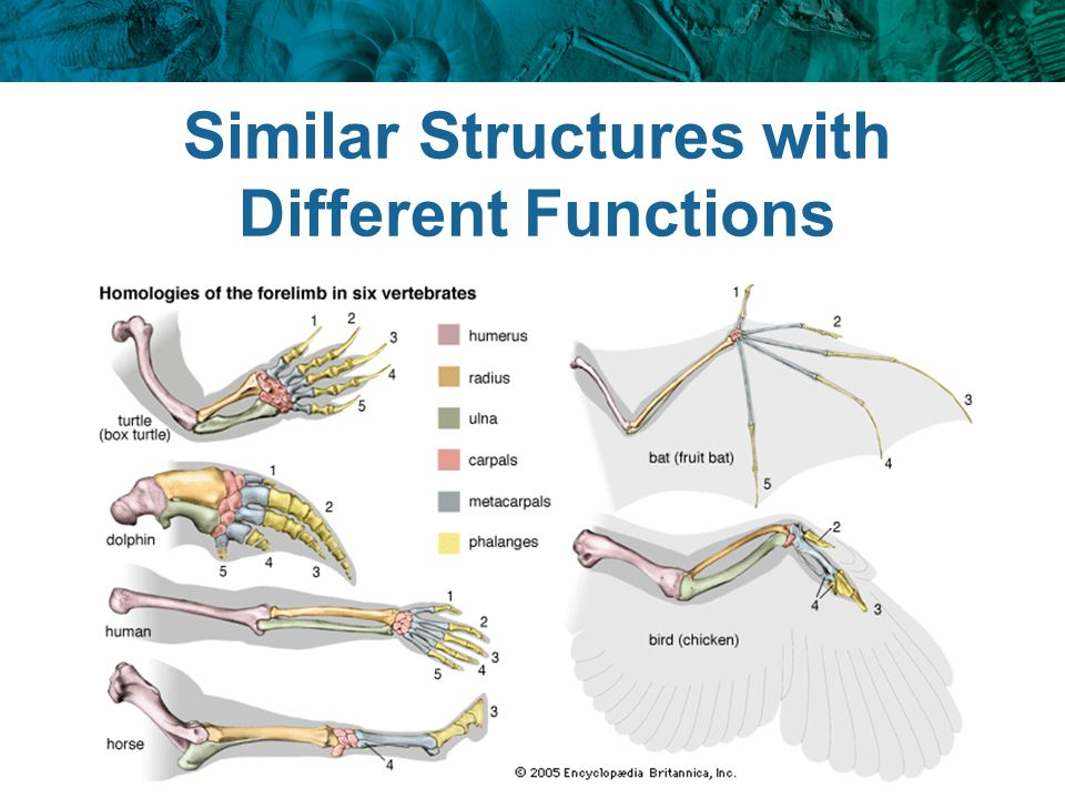 Similar Structures with Different Functions