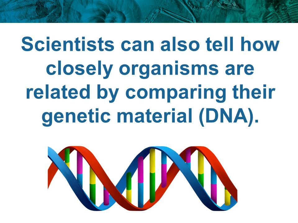 Scientists can also tell how closely organisms are related by comparing their genetic material (DNA).