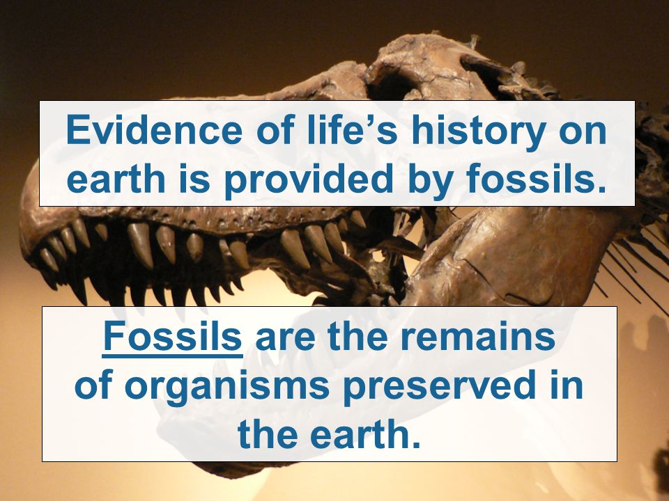 Evidence of life's history on earth is provided by fossils.
