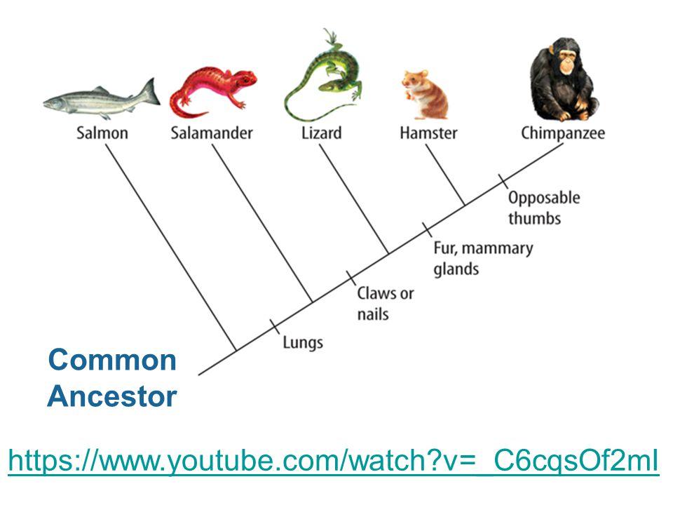 Common Ancestor https://www.youtube.com/watch v=_C6cqsOf2mI