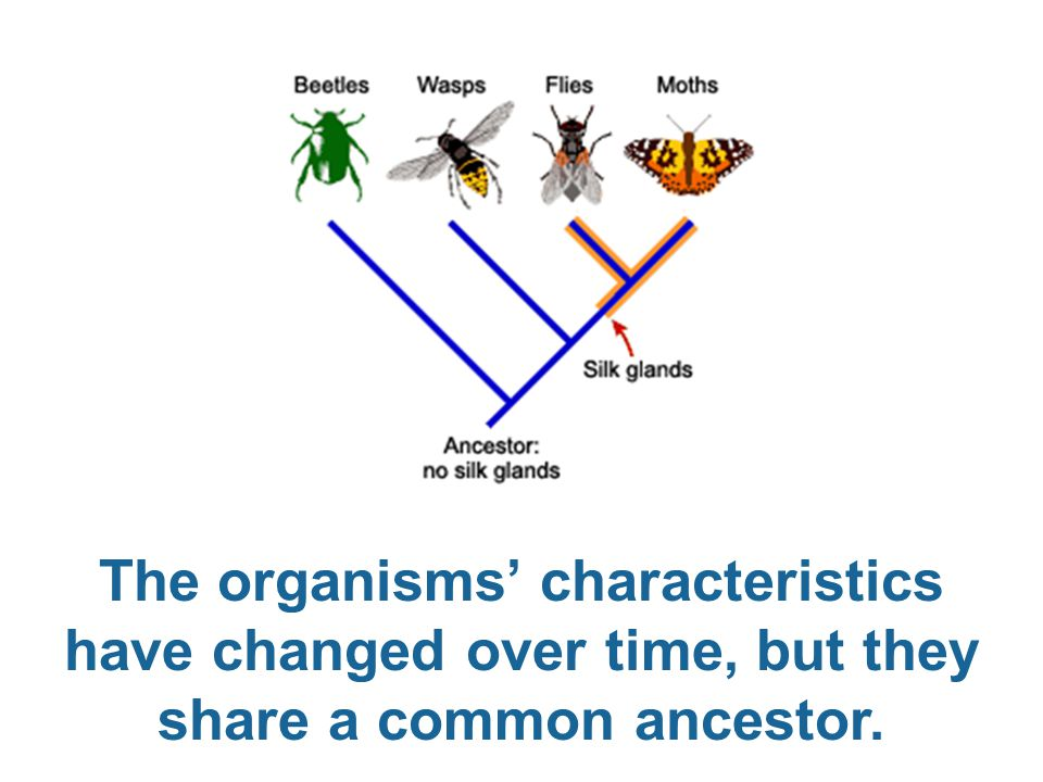 The organisms' characteristics have changed over time, but they share a common ancestor.
