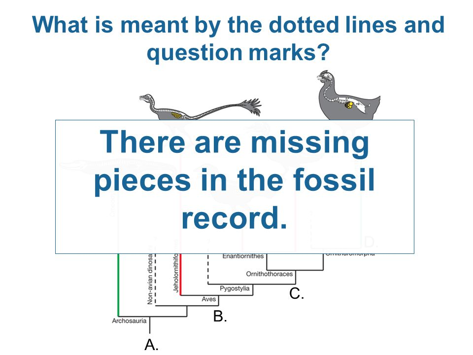There are missing pieces in the fossil record.
