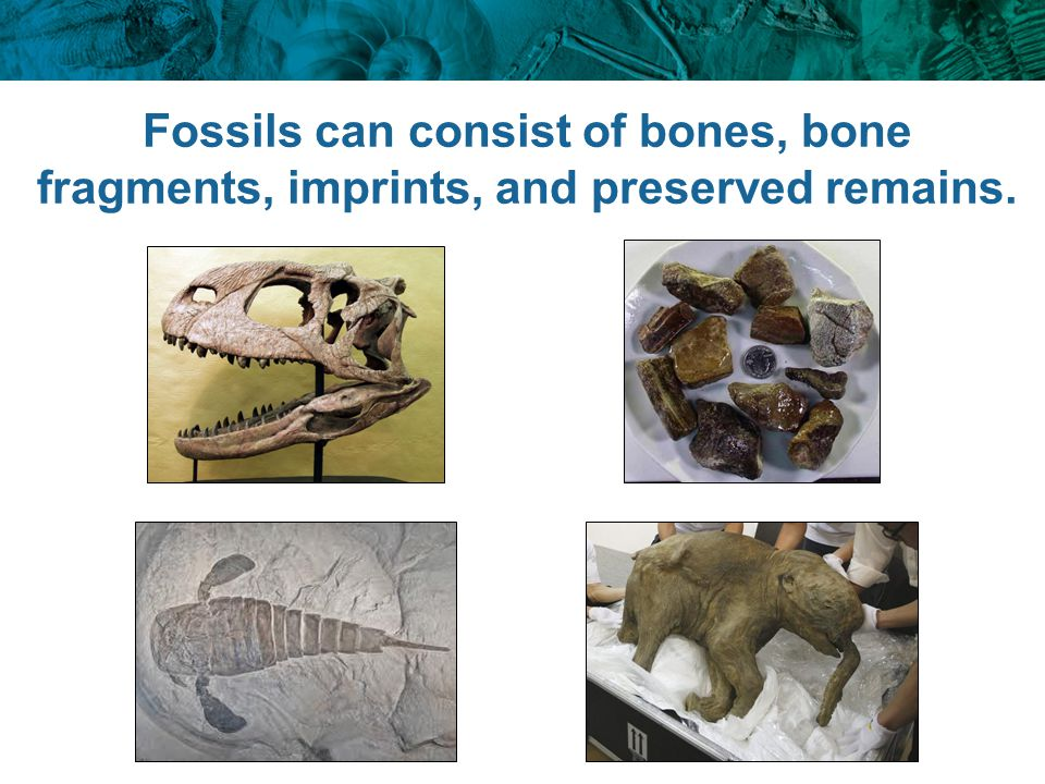 Fossils can consist of bones, bone fragments, imprints, and preserved remains.