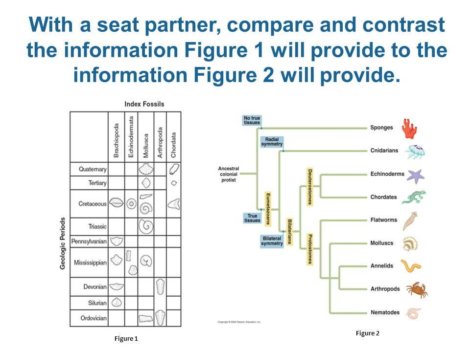 With a seat partner, compare and contrast the information Figure 1 will provide to the information Figure 2 will provide.