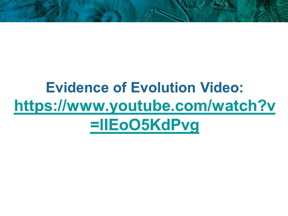 Evidence of Evolution Video: