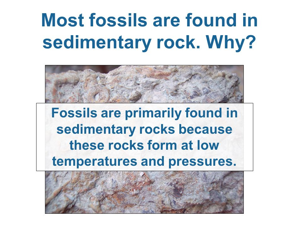 Most fossils are found in sedimentary rock. Why