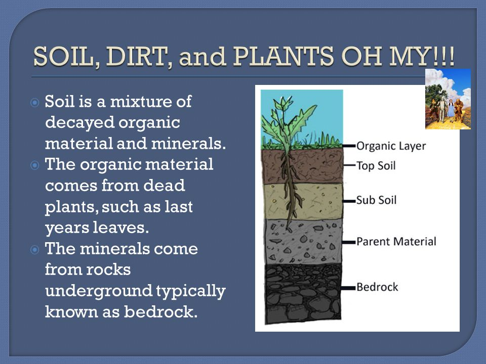 SOIL, DIRT, and PLANTS OH MY!!!