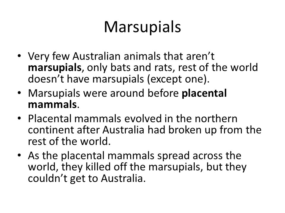Marsupials Very few Australian animals that aren't marsupials, only bats and rats, rest of the world doesn't have marsupials (except one).