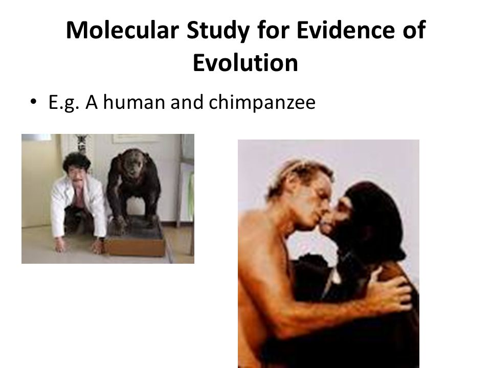 Molecular Study for Evidence of Evolution