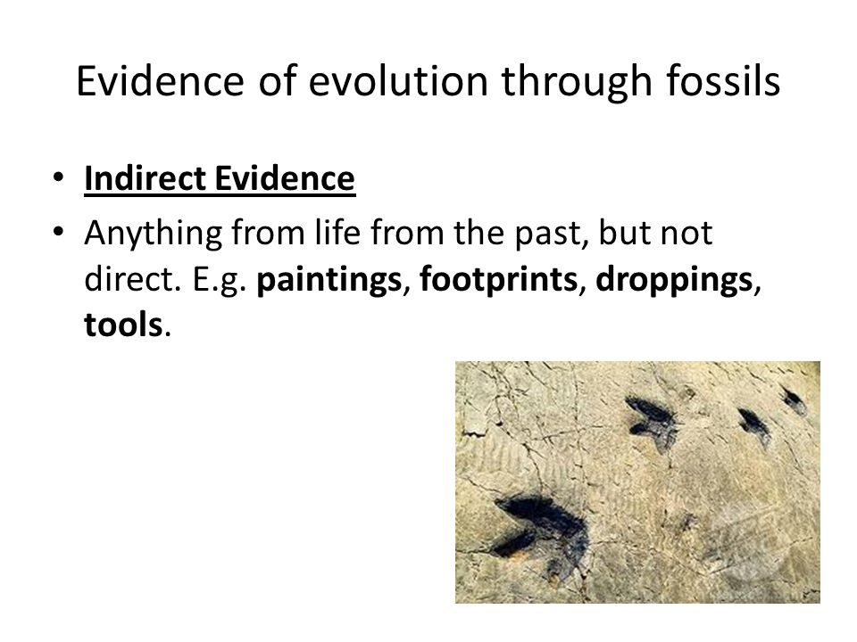 Evidence of evolution through fossils