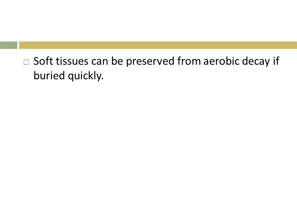Soft tissues can be preserved from aerobic decay if buried quickly.