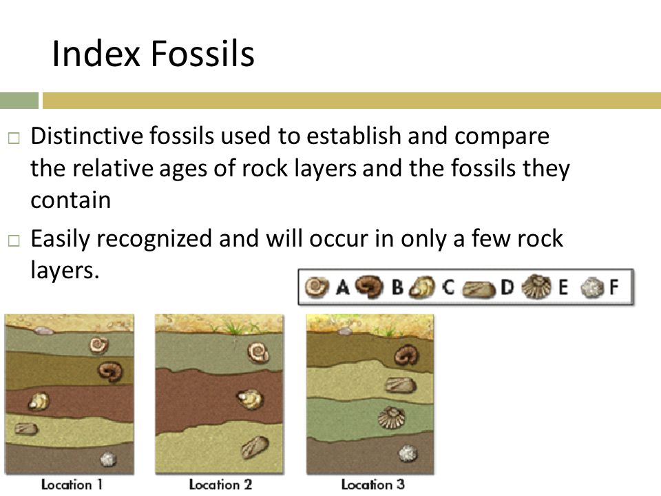 Index Fossils Distinctive fossils used to establish and compare the relative ages of rock layers and the fossils they contain.