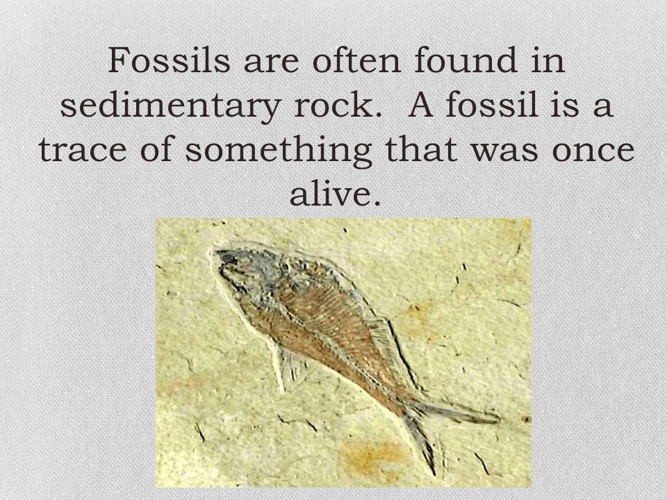 Fossils are often found in sedimentary rock