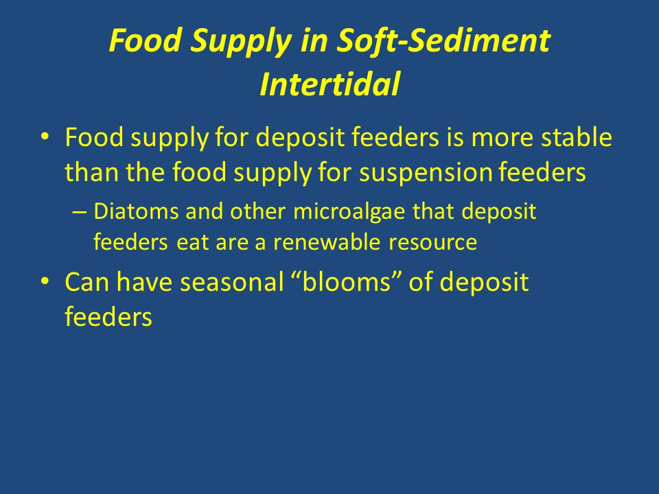 Food Supply in Soft-Sediment Intertidal