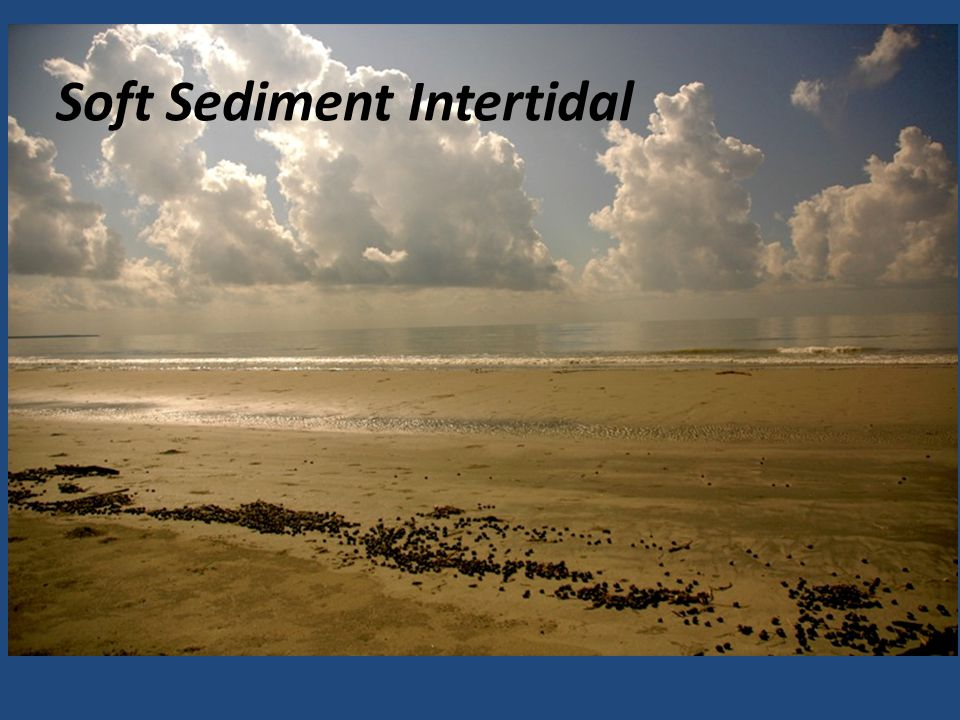 Soft Sediment Intertidal