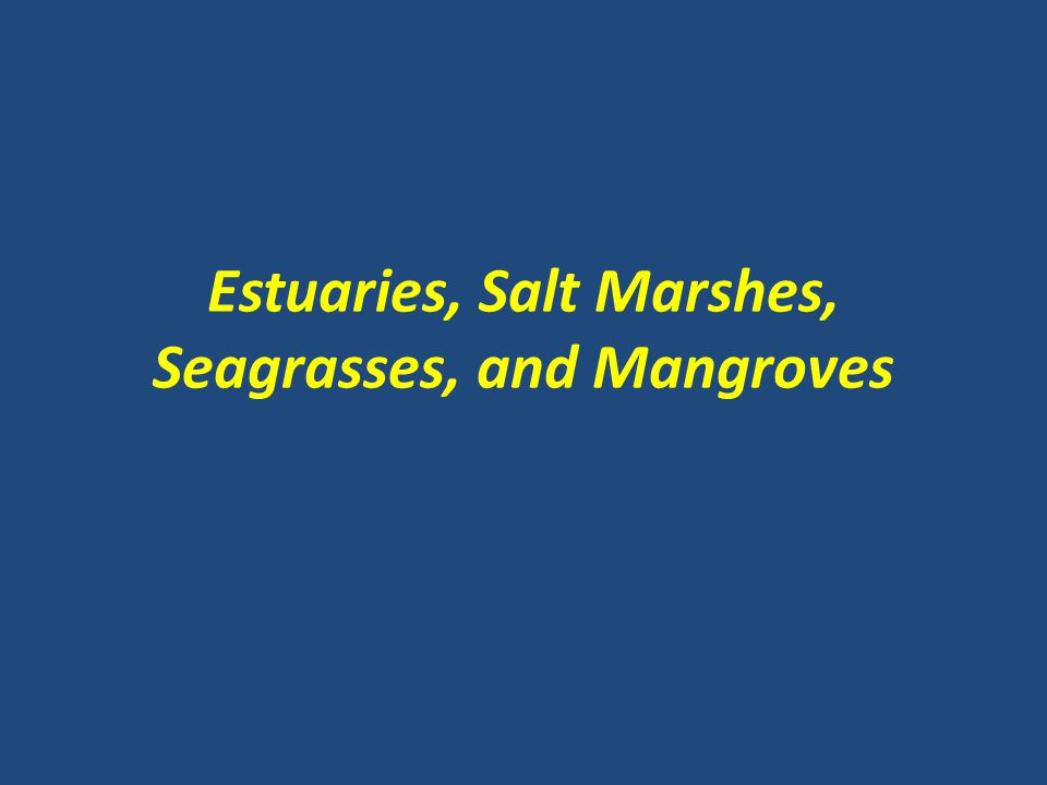 Estuaries, Salt Marshes, Seagrasses, and Mangroves