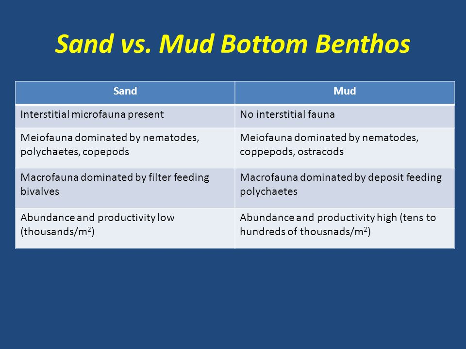 Sand vs. Mud Bottom Benthos
