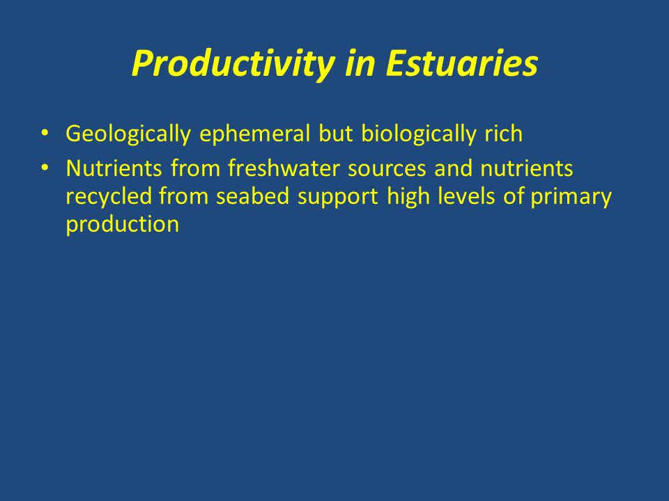 Productivity in Estuaries