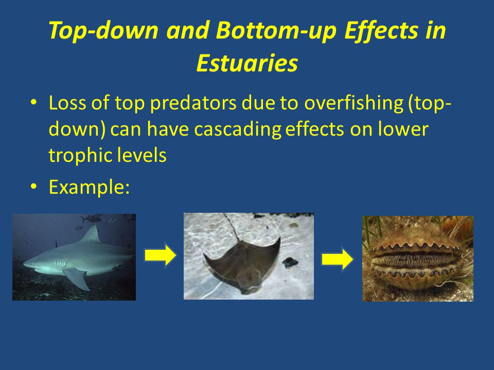 Top-down and Bottom-up Effects in Estuaries