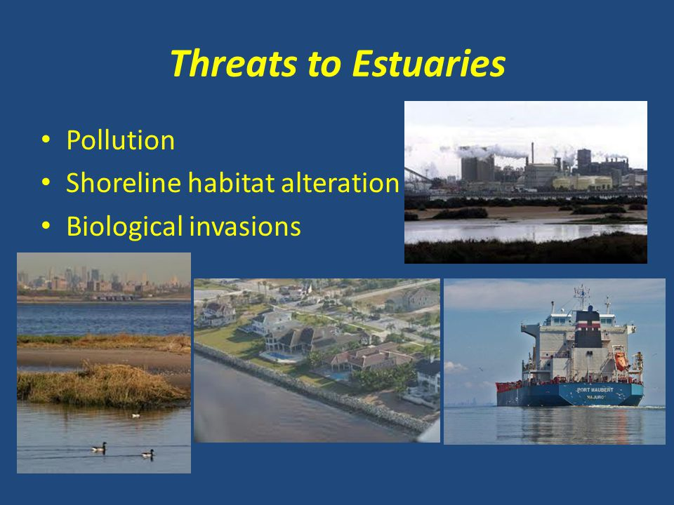 Threats to Estuaries Pollution Shoreline habitat alteration