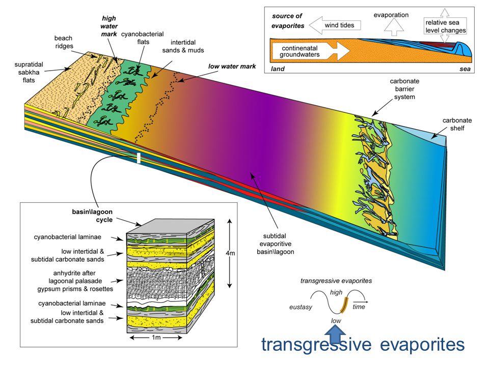 transgressive evaporites