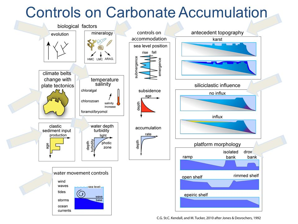 Controls on Carbonate Accumulation