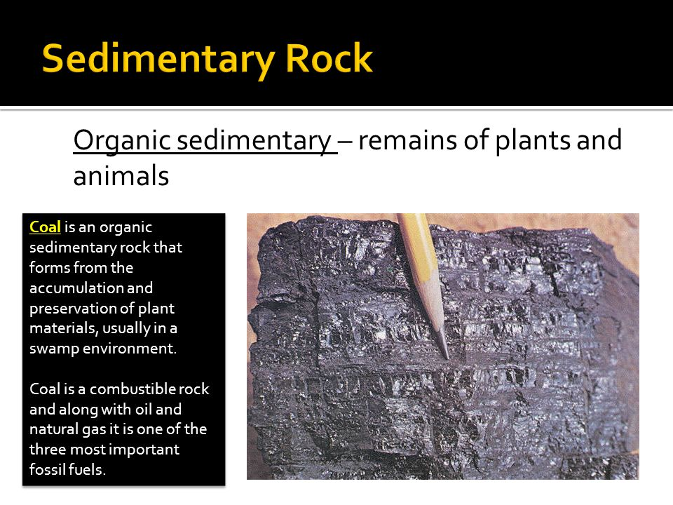 Sedimentary Rock Organic sedimentary – remains of plants and animals